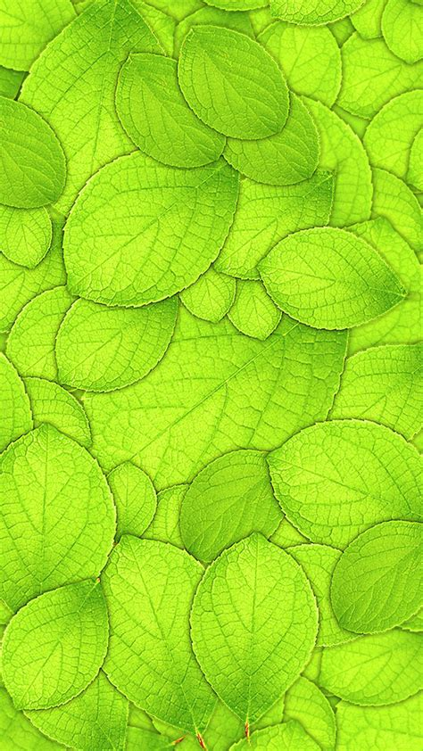 leaf pattern textured wallpaper green leaf textured wallpaper www imgkid com the image