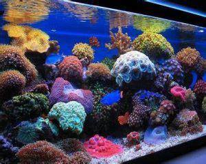 best led lighting for reef tank 10 best led lighting for reef tanks 2018 reviews guide