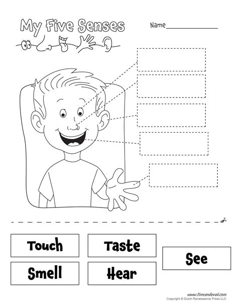 5 Senses Worksheets five senses worksheet tim de vall