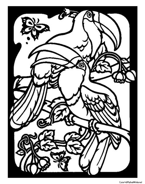 coloring page toucan toucans coloring pages for colouring pages