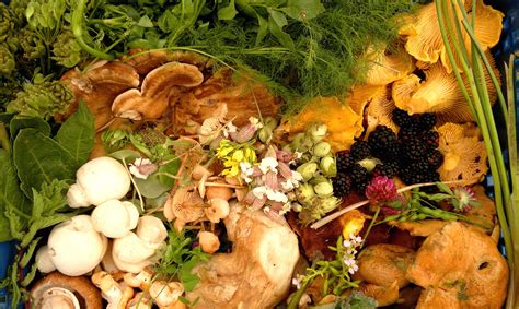 wilderness food foraging sustainability and the media galloway foods