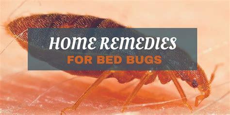 fightbugscom    pest control tips tricks ideas