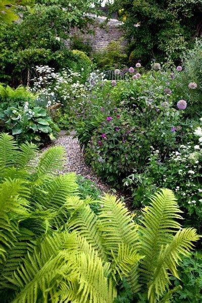ferns great gardens ideas wild garden pinterest