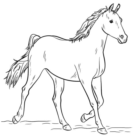 black and white coloring pages of horses grey arabian horse coloring page free printable coloring