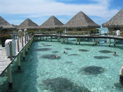best overwater bungalows in moorea moorea tahiti overwater bungalows yelp