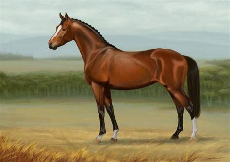 imagenes increibles de caballos 30 im 225 genes de los caballos m 225 s bonitos del mundo para