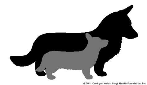 corgi puppies for sale florida cardigan corgi puppies for sale in florida