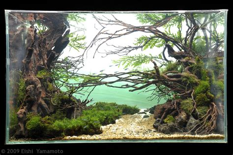 Aga Aquascaping Contest by Takashi Amano Aquascape