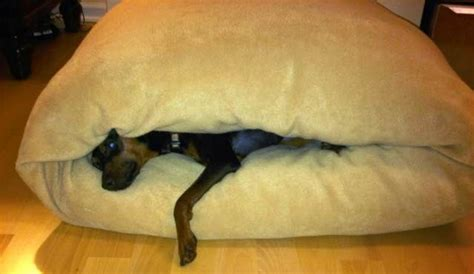 burrow dog bed dog burrow beds cotton all things yoyo pinterest