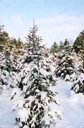 horton original tree farms christmas trees near aurora