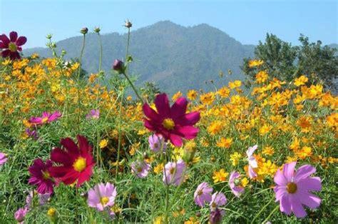semi prato fiorito prato fiorito cos 232 ecco alcuni consigli utili per la