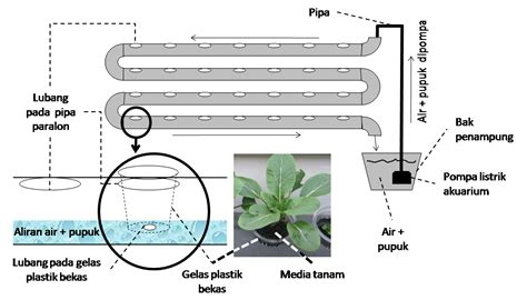cara membuat nutrisi air hidroponik tips menanam tanaman hidroponik sederhana dan mudah