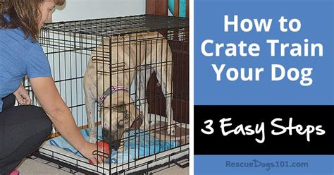 how to crate my puppy how to crate your or puppy in 3 easy steps rescue dogs 101