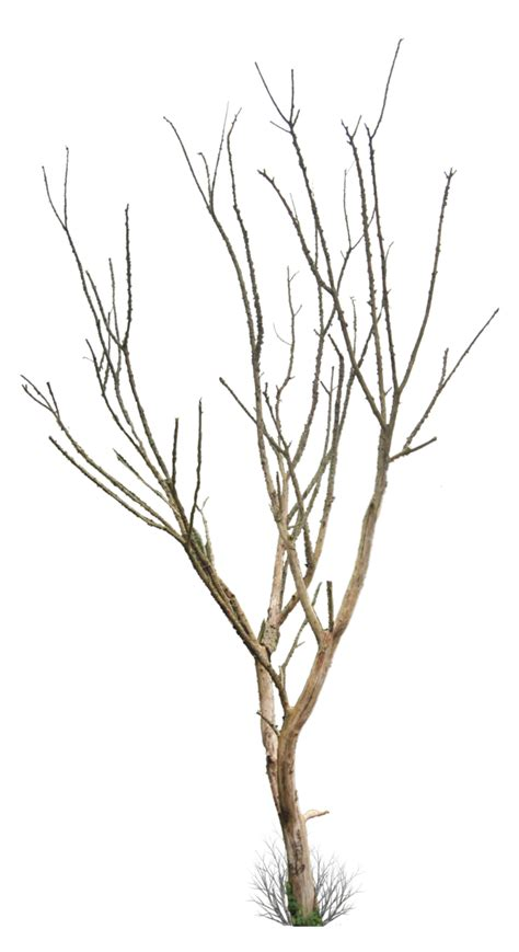 tree branch vector png wesharepics