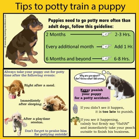 how to puppy pad a puppy stop dogs pumpkin puppy pad tips