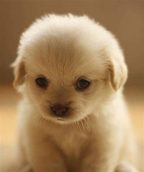 cute pictures of puppies 1 cute puppy pictures weneedfun
