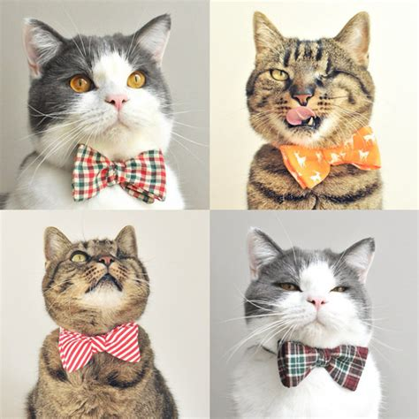 dress up your cat with these festive bow ties