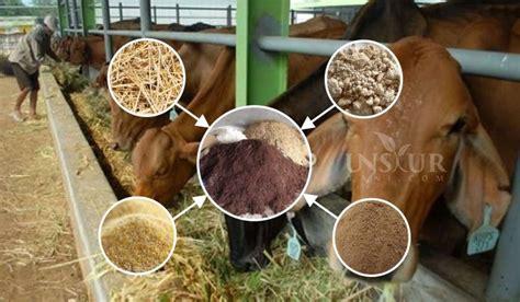 Bioboost Untuk Ternak Sapi menghitung dosis formula ransum yang tepat untuk sapi ternak unsurtani