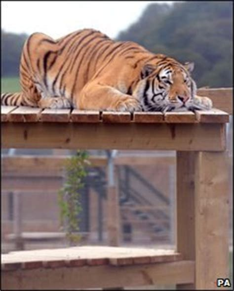 Tiger Is A Scaredy Cat tanvir the tiger is a scaredy cat