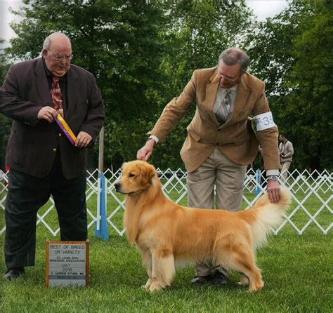 best golden retriever breeders top golden retriever breeders wisconsin photo