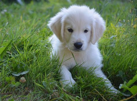 giardia puppy giardia in puppies causes signs treatment canna pet 174