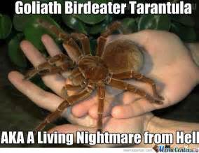 Worlds biggest spiders in the world pictures dog breeds picture