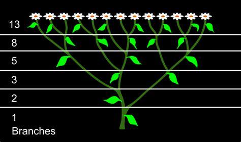 numerical pattern in nature fibonacci numbers in nature part 1 minxtech