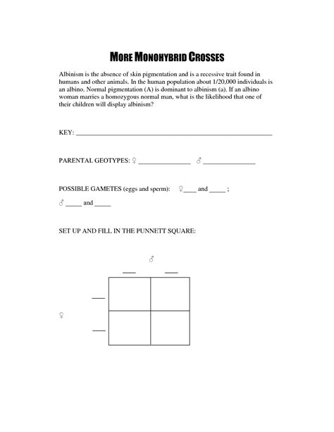Punnett Square Problems Worksheet by 28 Dihybrid Punnett Square Worksheet Dihybrid Cross