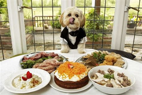 how should dogs eat puppy food 9 table foods your should never eat a letter to my