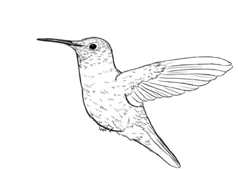 how to draw a hummingbird draw central
