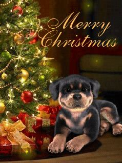 merry christmas sleepy puppy pictures   images  facebook tumblr pinterest