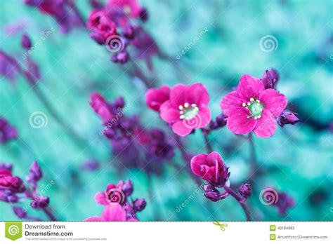 imagenes de rockeras hermosas flores hermosas de la primavera en tono abstracto del