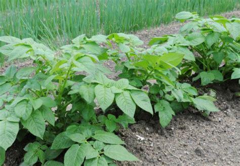 Garten Giftige Pflanzen by Giftige Pflanzen Im Garten Obi Ratgeber
