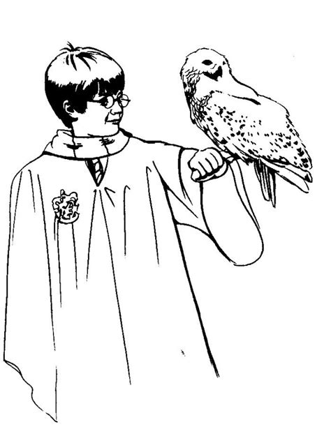 harry potter owl coloring pages harry potter color pages coloring home