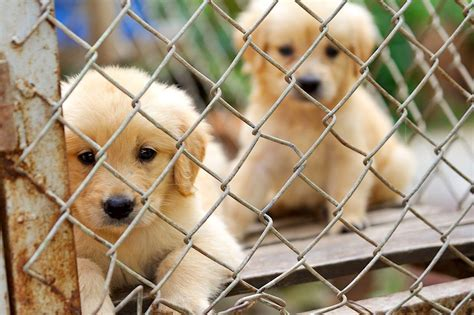 animal shelter puppies 10 reasons to adopt a shelter pet