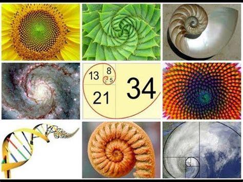 patterns in nature youtube fibonacci in nature the code of life fibonacci