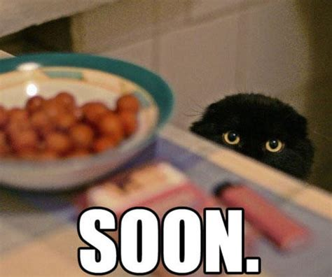 Soon Cat Meme - 25 ominous soons smosh
