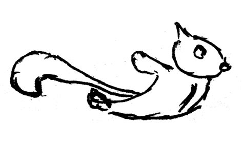 how to draw flying squirrel