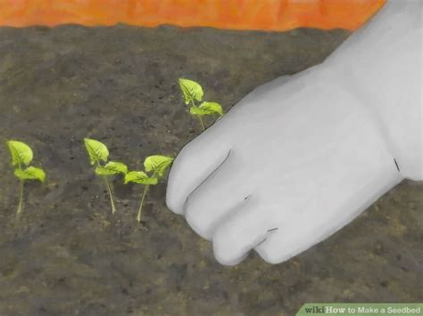 seedbed  pictures wikihow