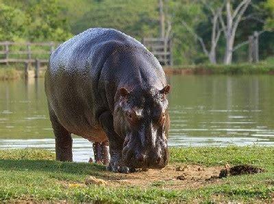 imagenes animales que viven en el agua animales que viven en agua dulce queanimal