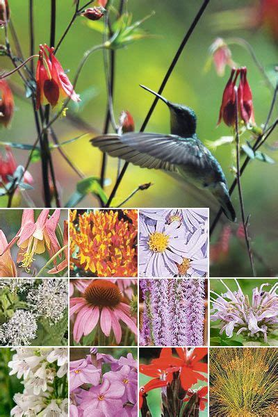 Hummingbird Garden Plants Hummingbird Pinterest Hummingbird Garden Flowers