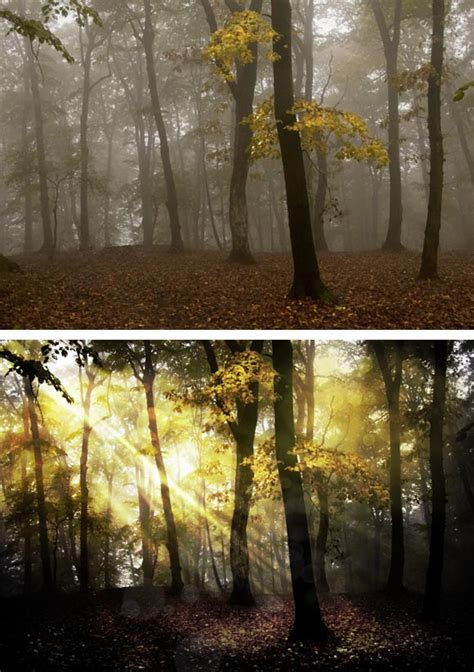 tutorial hdr toning photoshop cs5 using hdr toning in photoshop to create a fantasy forest scene
