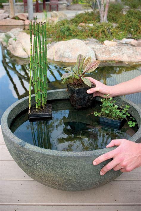 aquatic patio pond  indoor  outdoor aquascapes