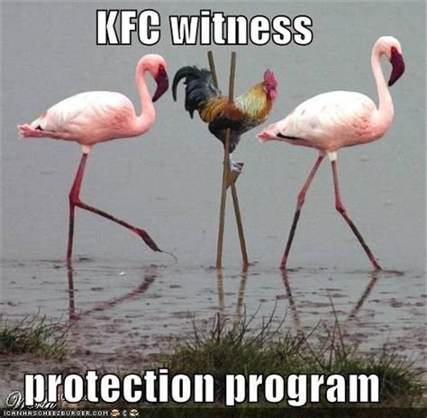 Funny Chicken Memes - 30 funny animal captions part 11 30 pics amazing