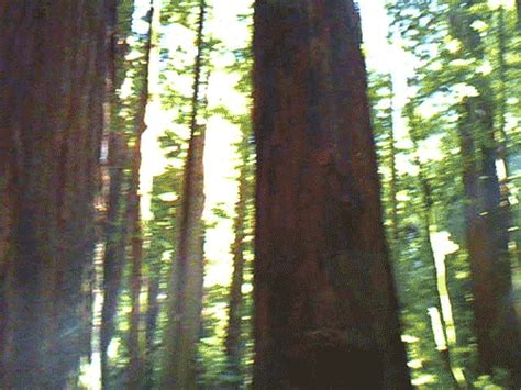 forest   trees gifs find share  giphy