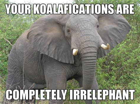 Funny Pun Memes - 20 animal puns that are damn funny viral circus