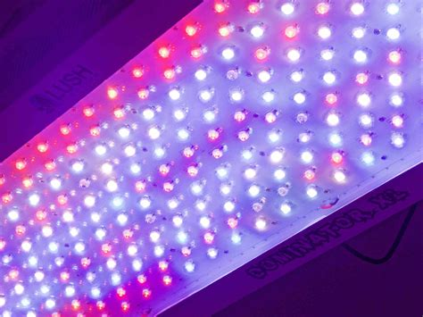 Growing Marijuana Using Led Grow Lights Using Led Lights