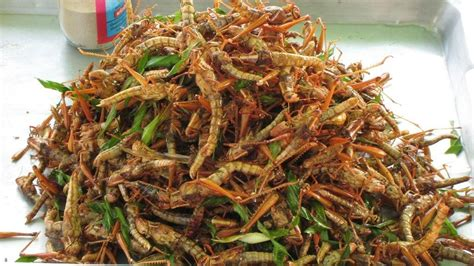 Would You Eat This Grasshopper Snack by 8 Creepy Insects Nigerians Eat