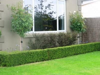Landscaping Ideas With Hedges Pdf Hedging Ideas For Gardens