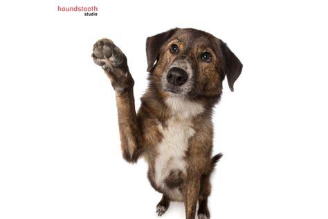 tricks for dogs new tricks for dogs dogslife breeds magazine